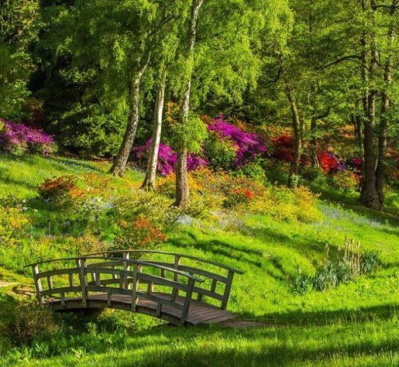 7 Rumput Taman Paling Populer dan Mudah Perawatannya